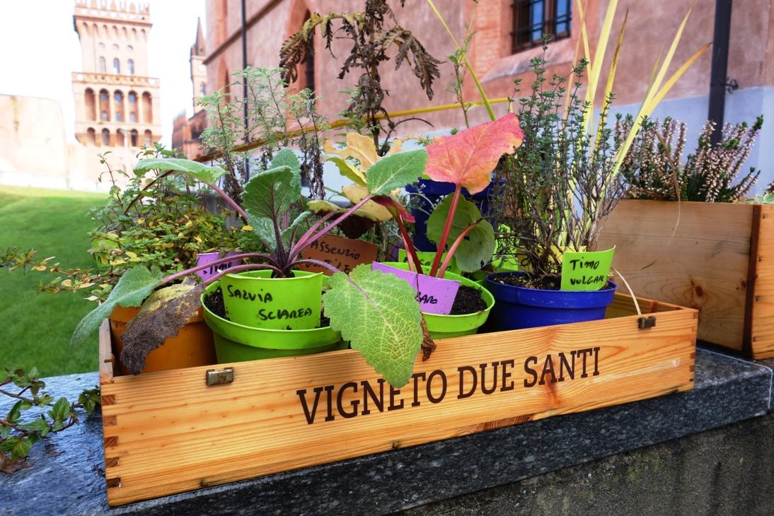 Herb plants at UNISG