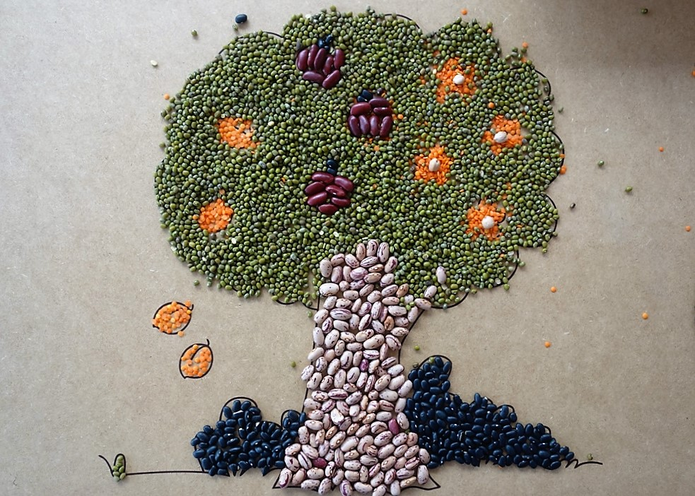 Bean diversity